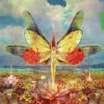 lotus rising