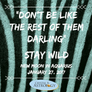 stay-wild-january-new-moon