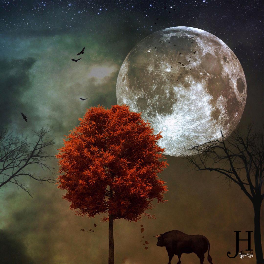 Taurus Full Moon November 2019: High Stakes Alongside Powerful Long Term Results