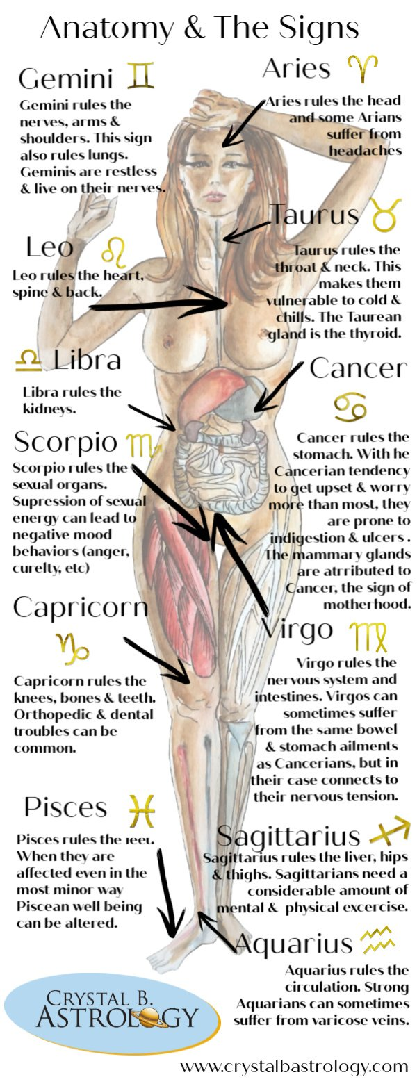 Medical Astrology: Connections Between Anatomy and the